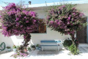Цветущие деревья на Пелопоннесе
