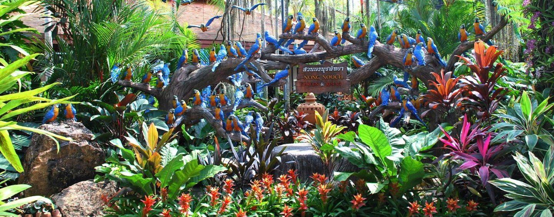 Тропический Ботанический Сад Нонг Нуч (Nong Nooch)