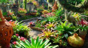 Паттайя. Ботанический Сад Нонг Нуч диковенные растения