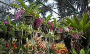 Паттайя. Ботанический Сад Нонг Нуч многообразие цветущих растений