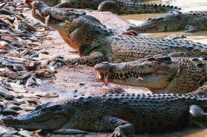 Паттайя. Парк миллионолетних камней крокодиловая ферма