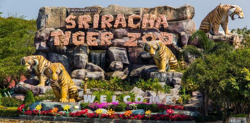 Зоопарк тигров Си Рача (Sriracha Tiger Zoo)