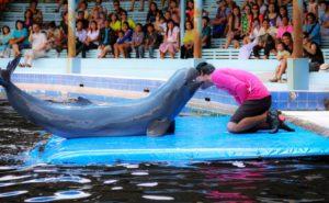 Паттайя. Дельфины на шоу в Морском оазисе