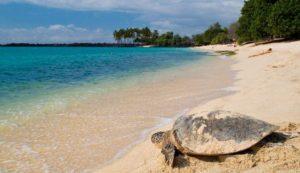 Большая часть пляжа Май Кхао принадлежит Национальному парку Сиринат и находится под защитой государства, так как севере пляжа – это единственное место на Пхукете, где гигантские черепахи откладывают яйца