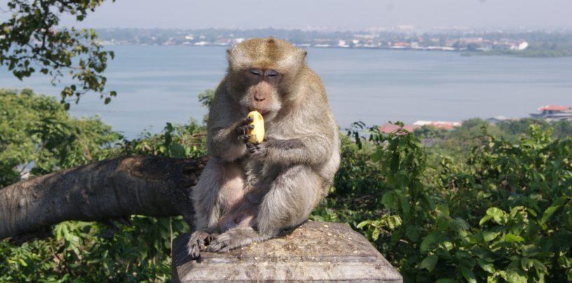 Центр дрессировки обезьян (Monkey Training Centre)