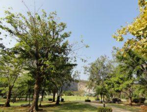 Паттайя. Гора золотого Будды. В окрестностях Кхао Чи Чан