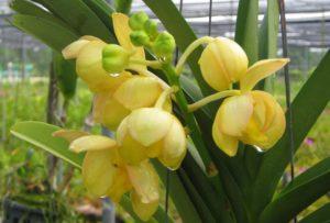 Многие из этих прекрасных цветов появились в результате сложной селекции