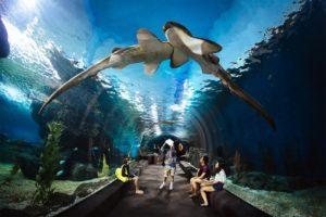 В океанариуме посетители могут спуститься в таинственные глубины океана по 105-метровому тоннелю из акрилового стекла