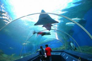 Аквариум со скатами и акулами