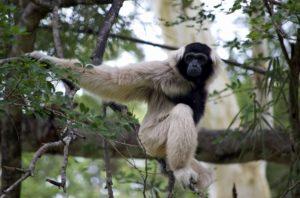 Кормить обезьян в зоопарке запрещено, но редко кто из посетителей может удержаться от этого