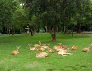 Животные в зоопарке Кхао Кхео