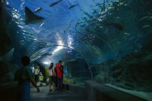Аквариум Siam Ocean World находится в торговом центре Siam Paragon, занимая два этажа здания и площадь в 10 000 квадратных метров.