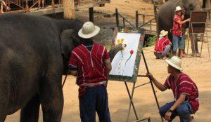 В питомнике слоны умеют играть в футбол, танцевать, писать картины и даже заигрывать с одинокими туристками.