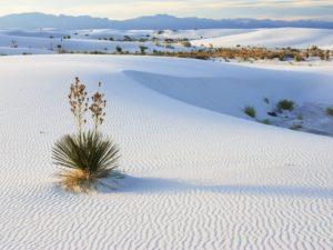 Дюны высотой до 50 м производят незабываемое эстетическое впечатление, которое дополняется возможностью прокатиться с верхушки дюны вниз.