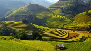 Девять десятых территории Большого Хошимина – это рисовые поля и разбросанные между ними деревни, в которых проживает около 25 % жителей этого региона.