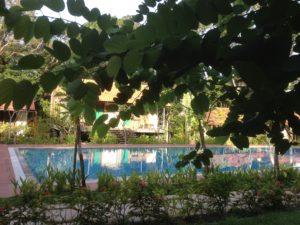 На зеленой территории отеля открытый бассейн.