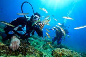 Живописная природа прибрежных вод подводного мира привлекает многих дайвингистов.