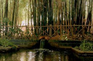 Южно-азиатский бамбук в саду Мажорель