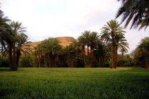 Сады Менара