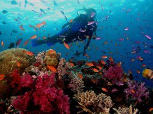 На этом побережье любителям водных видов спорта есть чем себя развлечь: заняться подводным плаванием, дайвингом.