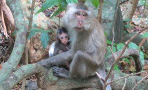 На территории заповедника проживают редкие виды животных, в том числе длиннохвостые макаки.
