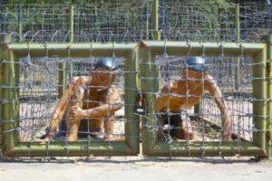 В тюрьме отбывали наказание более 40000 вьетнамских солдат и политических деятелей.