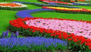 Территория парка цветов