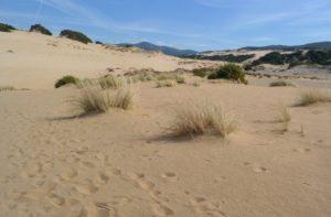 Песчаные дюны в Пишинас