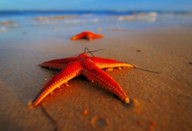Куда поехать на майские праздники? На море!